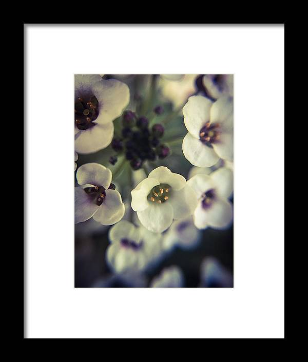 Flower Framed Print featuring the photograph A Beautiful Bouquet by Angela Sherrer