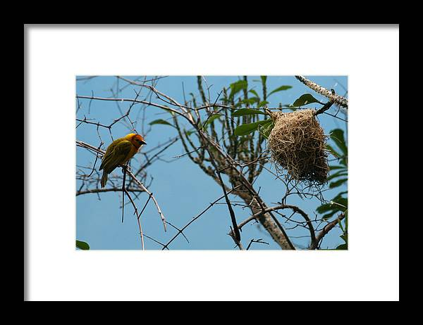 Bird Framed Print featuring the photograph A Bird In 3d by Y C