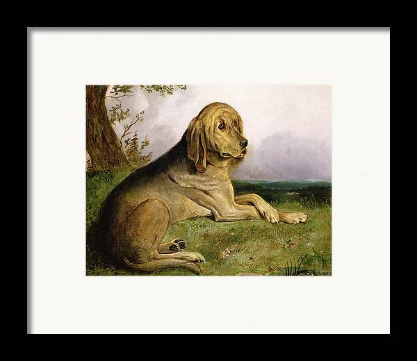Bloodhound Framed Print featuring the painting A Bloodhound In A Landscape by English school