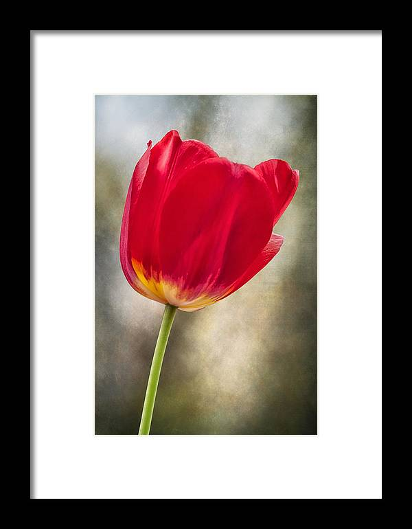 Flower Framed Print featuring the photograph A Bold Red Embrace by Bill Tiepelman