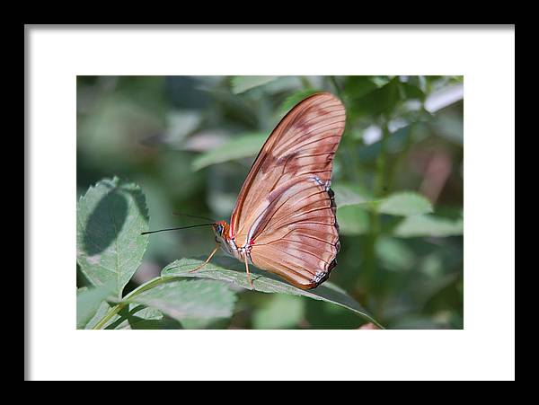 Butterfly Framed Print featuring the photograph A Butterfly With Closed Wings by Susan Heller