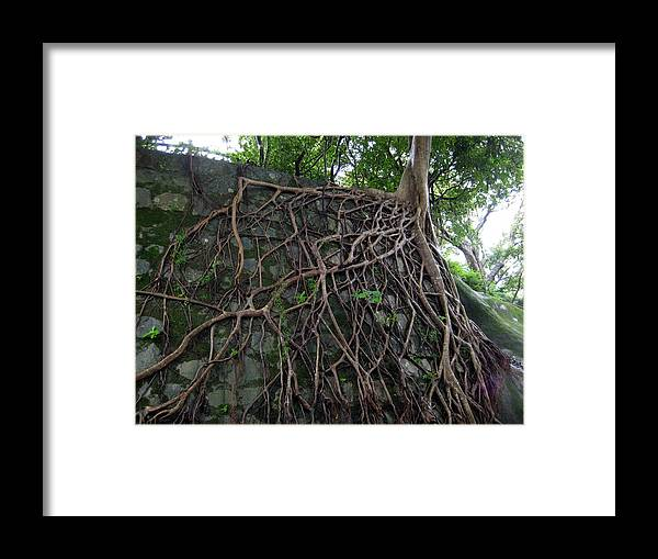 Strong Root Framed Print featuring the photograph A Chance Of Survival by Ming Yeung