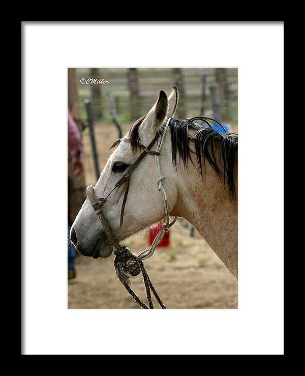 Cowboy Framed Print featuring the photograph A Cowboys Partner.. by Carol Miller