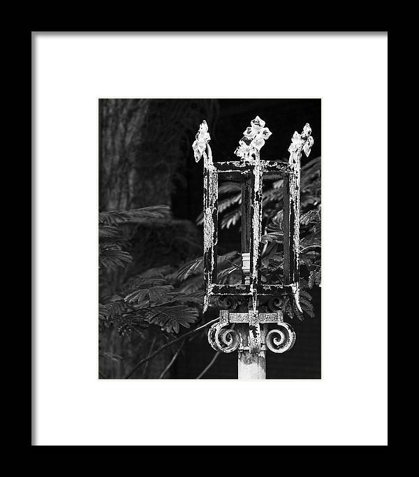Decay Framed Print featuring the photograph A Crown Of Thorns by Mike McMurray