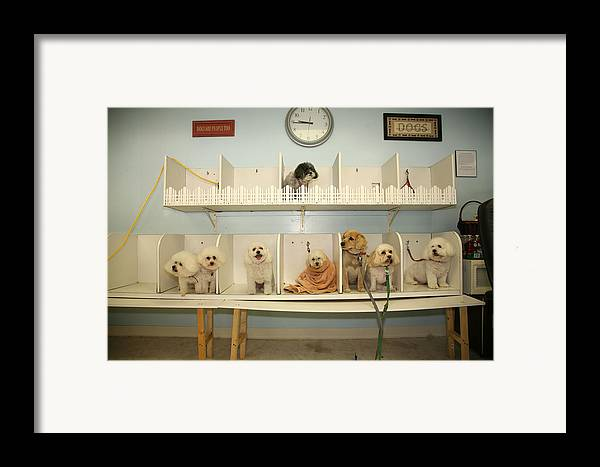 Animal Framed Print featuring the photograph A Day At The Doggie Day Spa by Michael Ledray
