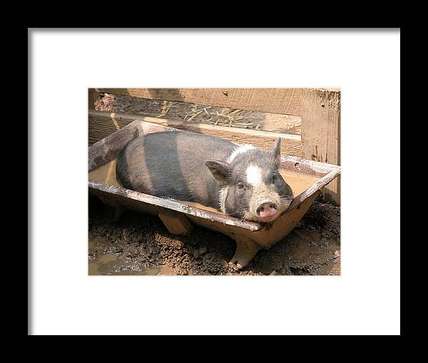 Nature Framed Print featuring the photograph A Day At The Spa by William Thomas