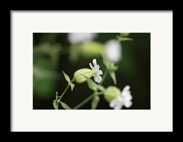 Wild Flowers Framed Print featuring the photograph A Delicate Balance by Alan Rutherford