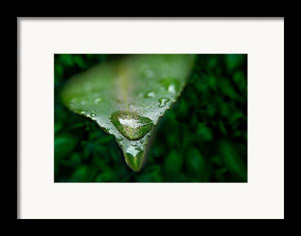 Macro Framed Print featuring the photograph A Drop by Dan Holm