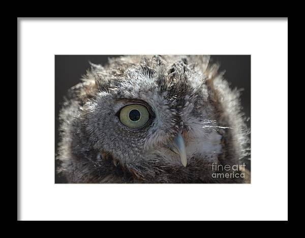 Rescue Framed Print featuring the photograph A Eye On You by Jodie Sims