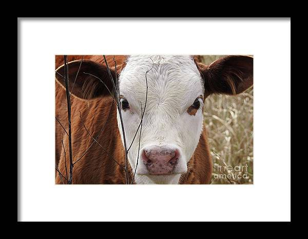 Cow Framed Print featuring the photograph A Face You Can Love - Cow Art #609 by Ella Kaye Dickey