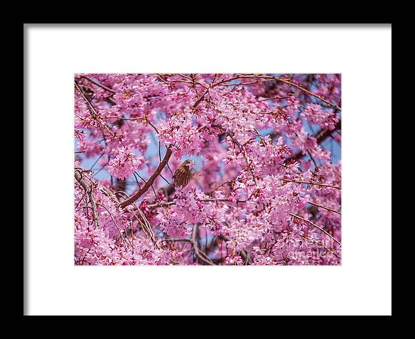 Bird Framed Print featuring the photograph A Flower For You by Clark DeHart