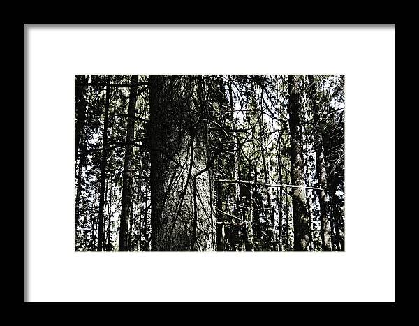 A Framed Print featuring the photograph A Forest Walk by HazelPhoto