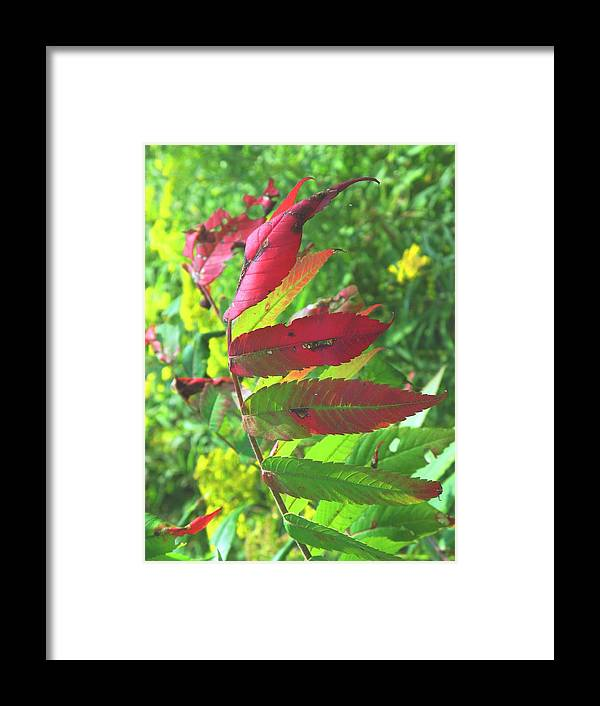 Leaves Framed Print featuring the photograph A Hard Tough Summer by Ian MacDonald