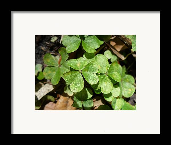 Nature Framed Print featuring the photograph A Little Luck by Stephanie Richards
