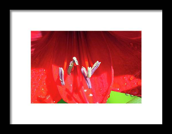 Macro Framed Print featuring the photograph A Macro World by Suzanne Gaff
