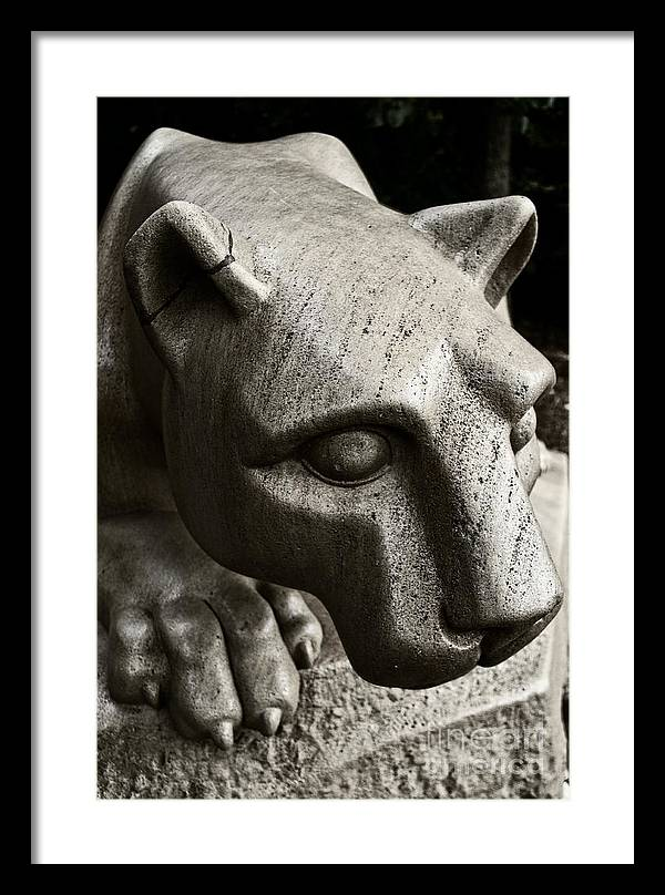A Nittany Lion by Tom Gari Gallery-Three-Photography