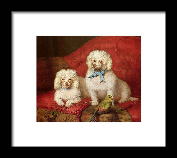 A Pair Of Poodles By English School (19th Century) Framed Print featuring the painting A Pair Of Poodles by English School