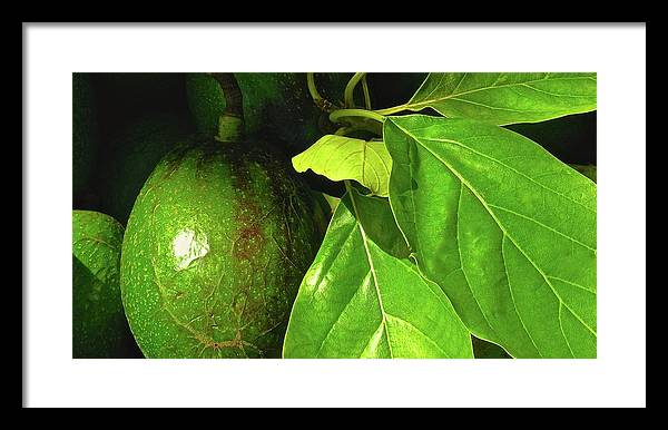 Hawaiian Avocados Framed Print featuring the photograph A Place In The Sun by James Temple