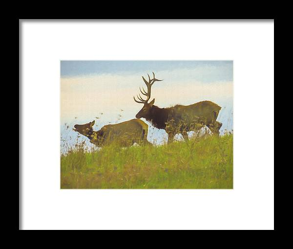 Pennsylvania Framed Print featuring the photograph A Portrait Of A Large Bull Elk Following A Cow,rutting Season. by Rusty R Smith