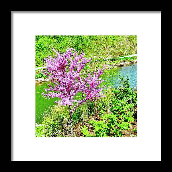 Pretty Pink Tree Framed Print featuring the photograph A Pretty Pink Tree Along a Stream by Kirsten Giving