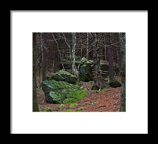 Forest Framed Print featuring the photograph A Private Light by Ted M Tubbs