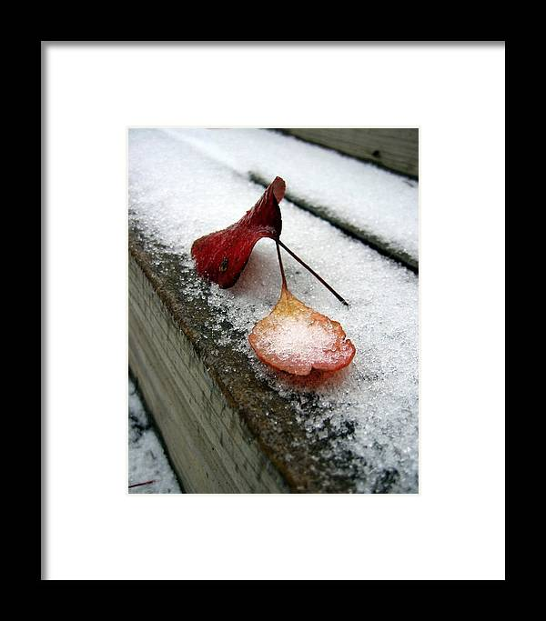 Red Autumn Leaves Framed Print featuring the photograph A Rare Occurrence by Lindsey Orlando