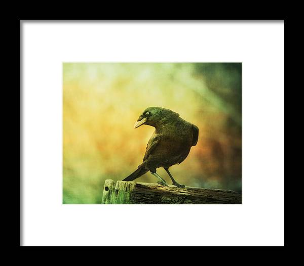 Raven Framed Print featuring the photograph A Ravens Poise by Susan Capuano
