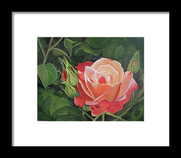 Floral Framed Print featuring the painting A Rose by Betty-Anne McDonald