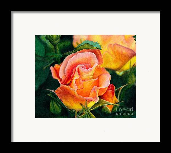 Coloured Pencil Framed Print featuring the painting A Rose For Nan by Amanda Jensen