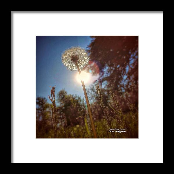 Flowers Framed Print featuring the photograph A Shiny Flower Day by Stwayne Keubrick