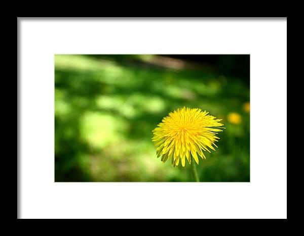 Green Framed Print featuring the photograph A Single Dandelion by Mark Platt
