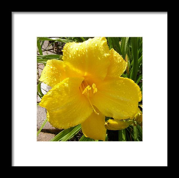 Flowers Framed Print featuring the photograph A Smile After The Rain by Jeanette Oberholtzer