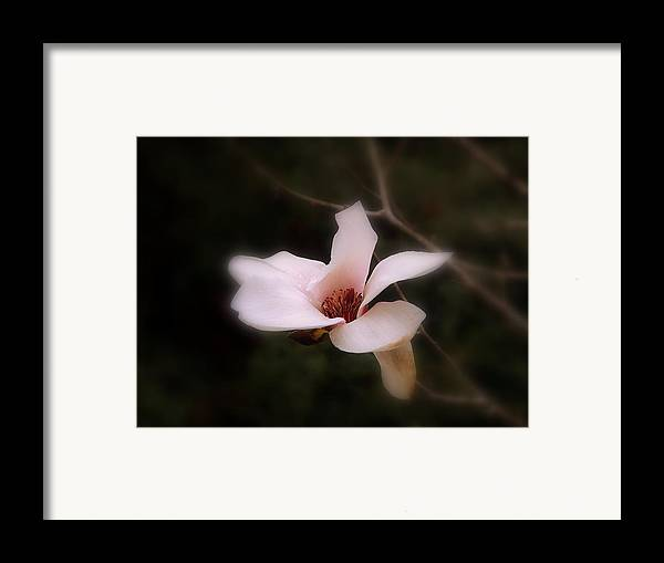 White Framed Print featuring the photograph A Soft Glow by Judy Waller