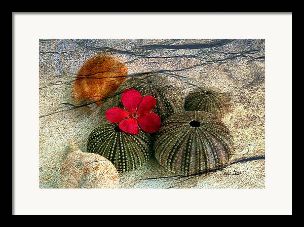 Shells Framed Print featuring the photograph A Soft Touch by Carolyn Staut