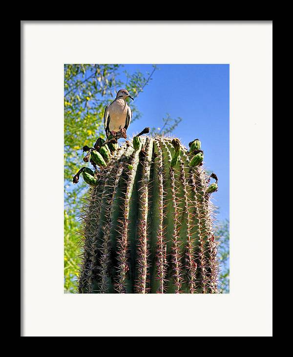 White Winged Dove Framed Print featuring the photograph A Spiky Home by Christine Till