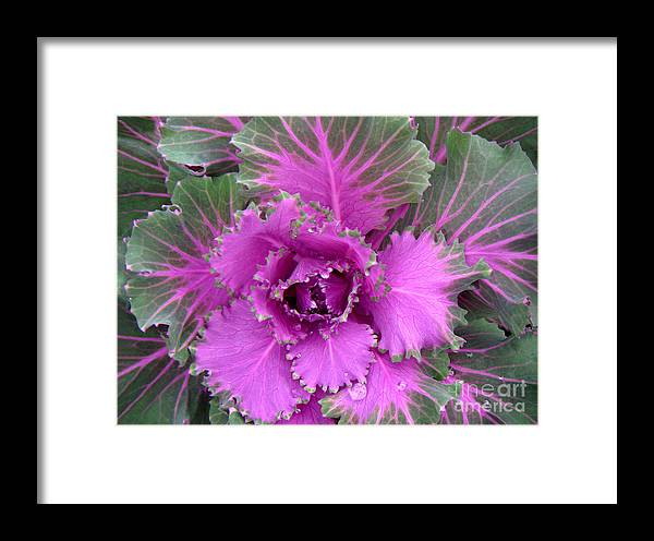 Nature Framed Print featuring the photograph A Study In The Shades Of Spring Four by Lucyna A M Green