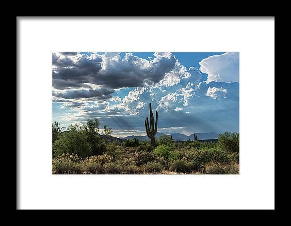 Arizona Framed Print featuring the photograph A Summer Day In The Sonoran by Saija Lehtonen