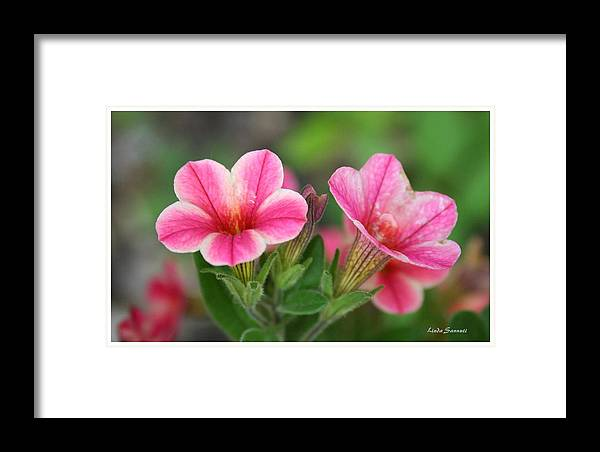 Flowers Framed Print featuring the photograph A Sunny Afternoon by Linda Sannuti