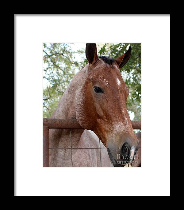 Horse Framed Print featuring the photograph A Sweet Face by Glenn Aker