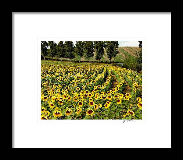 Sunflower Framed Print featuring the photograph A Thousand Suns by Joe Bonita