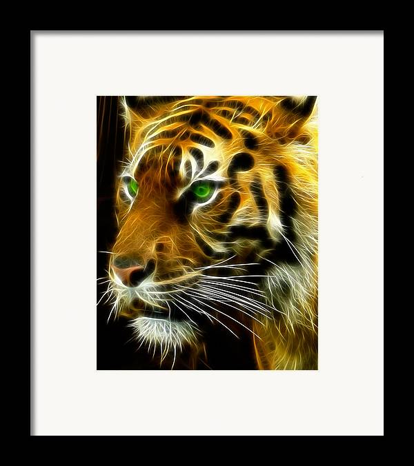 Bengal Framed Print featuring the photograph A Tiger's Stare by Ricky Barnard