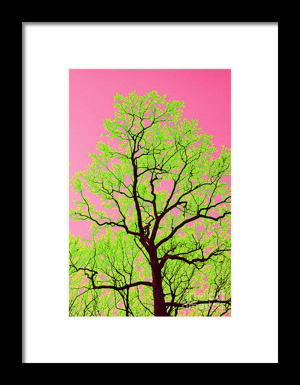 Lime Green Framed Print featuring the photograph A Tree Grows In Vegas by Valerie Fuqua