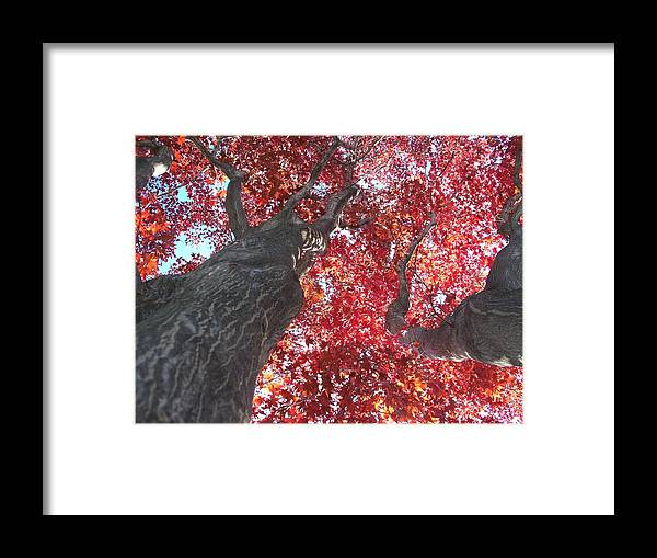 Trees Framed Print featuring the photograph A Twist In Time by Jennifer Addington