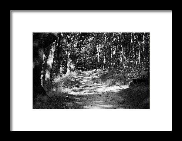 Deutschland Framed Print featuring the photograph A Walk In The Woods by Edward Myers