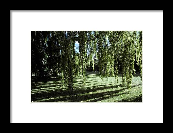 Hobart Framed Print featuring the photograph A Weeping Willow Casts Long, Cool by Jason Edwards