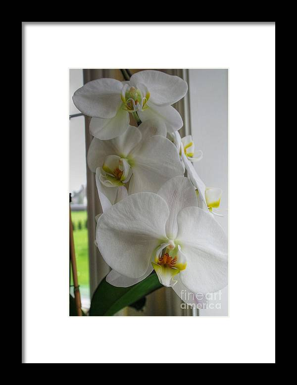 Orchid Framed Print featuring the photograph A White Orchid Day by David Bearden
