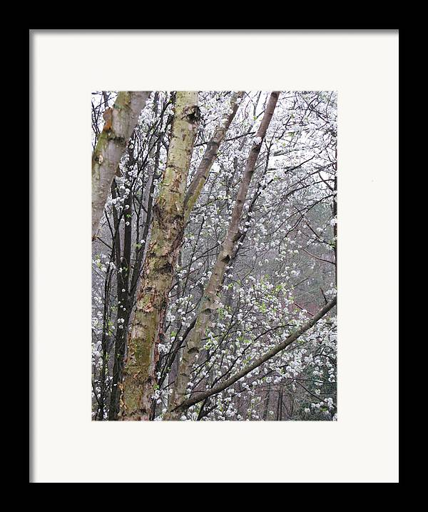 Trees Framed Print featuring the photograph A Winter Day by Donna Thomas