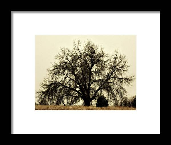 Tree Framed Print featuring the photograph A Winter's Day by Marilyn Hunt