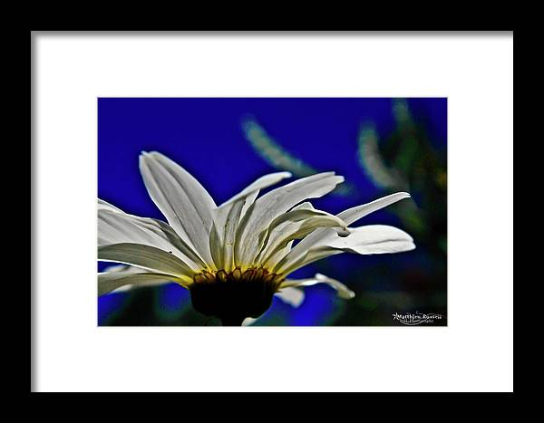 Framed Print featuring the photograph A Worms Eye View Of A Daisy by Matthieu Russell