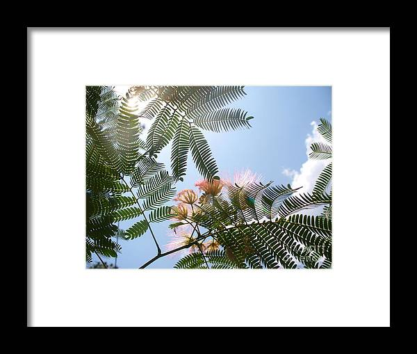 Flower Framed Print featuring the photograph Above by Stephanie Richards